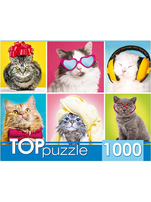 TOPpuzzle. ПАЗЛЫ 1000 элементов. ГИТП1000-4138 Смешные котята