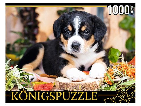 Konigspuzzle. ПАЗЛЫ 1000 элементов. ШТK1000-0645 ЩЕНОК ШВЕЙЦАРСКОГО ЗЕННЕНХУНДА