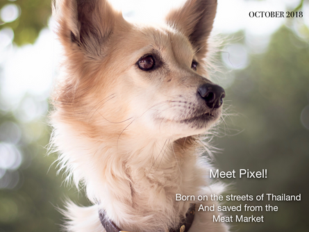 And the winner is...Pixel!