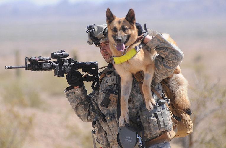 Bo Derek Pet Care Support Military