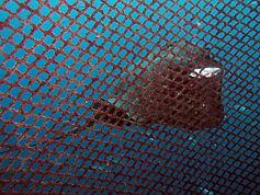 Animal salvaje externo a las jaulas de lubina