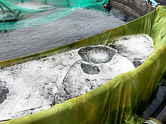 Manejo de los peces, redes, tanques y utillaje © Skretting España