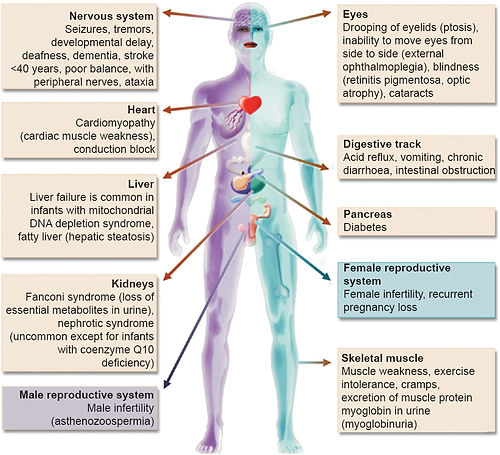 mito disease pic.jpg