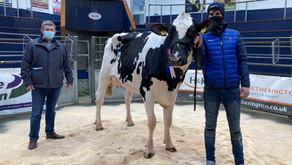 Border & Lakeland Holstein Club Sale February Champion...