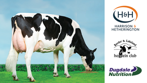 H&H Border & Lakeland Holstein Club Dairy Sales 2021...