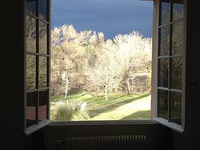 vdb trees.jpg
