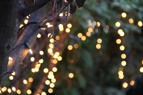 string-lights-bokeh-tree.jpg