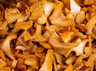 mushrooms-1603661__340.jpg