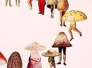 Med Mushrooms.jpg