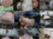 Birch Polypore Medley.jpg