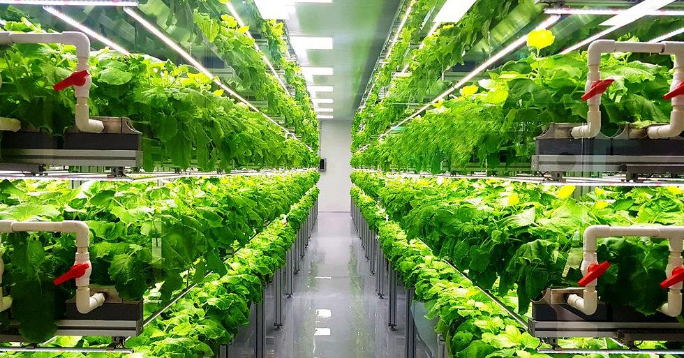 vertical-farming-3.jpg
