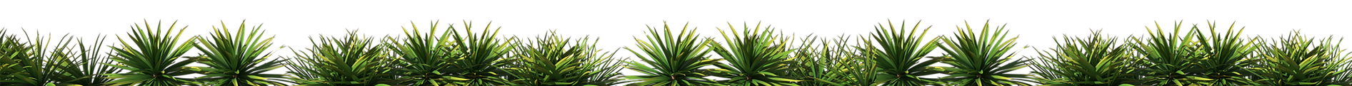 big yucca strip.png