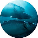 Salmon_600_9adf0400fcb5bf9bbbcf3febbcdaf