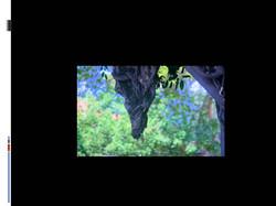 שקופית48.JPG