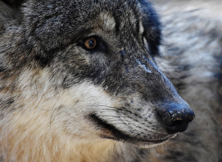 How to Take Time Off When the Wolf's at the Door