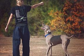 Rescate de Animales y cuidado