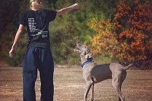 certified dog trainer dog training south shore, ma Weymouth Braintree Hingham
