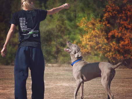 Resilience in Dog Training