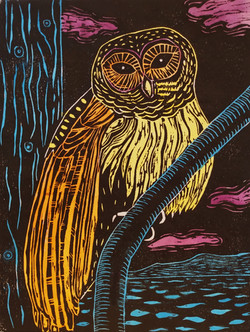 Barred Owl in Color