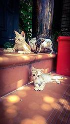 Jack's Cat Cafe: Coast Vietnam, Hoi An
