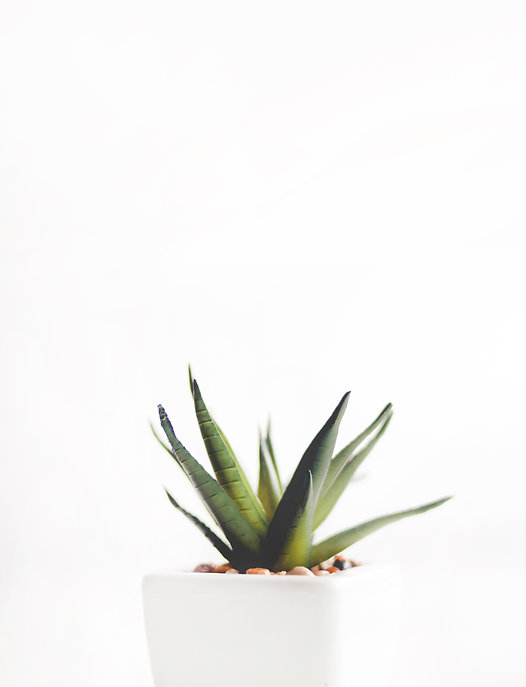 aloe-vera-plant-on-white-pot-912410.jpg