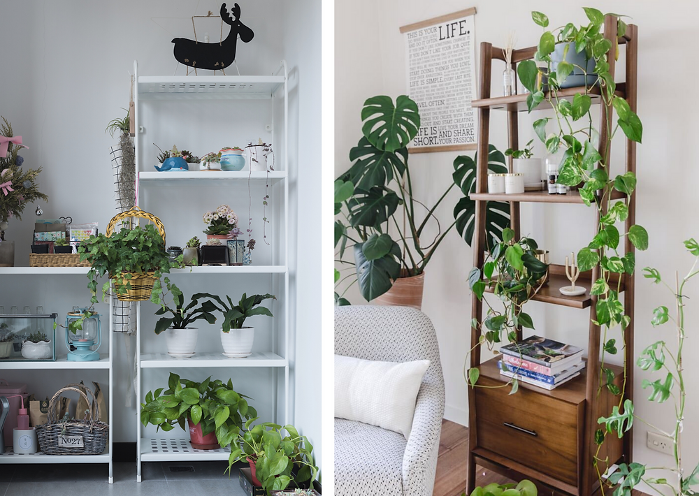 Shelves with plants in living room
