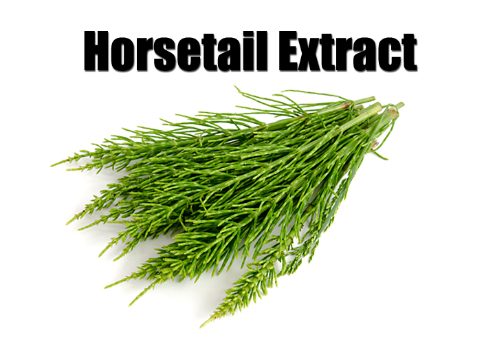horsetail herb for hair growth unveiling naava