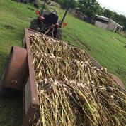 Garlic Wagon
