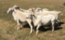 GEOF Rams2.jpg