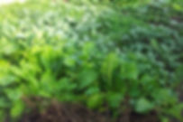 GEOF Greens.jpg