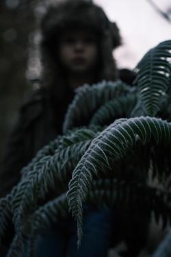 Frozen Fern - Timber Oregon - Nilas Phot