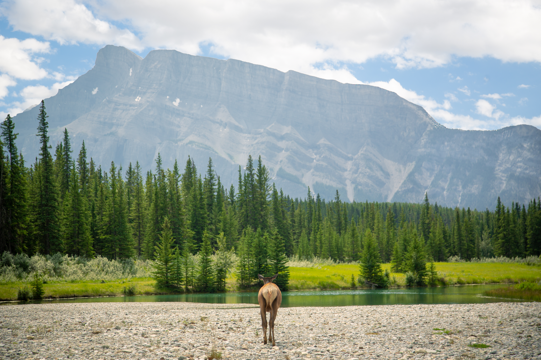 Cascade Ponds - Elk Booty - Banff Lakes