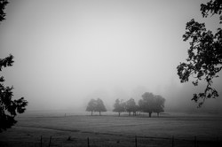 Southern Oregon Morning - Fall - Oregonl -  PNW - 2017 - Nilas Photography-2