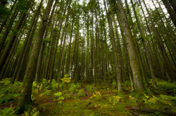 Washington - British Columbia -  PNW - 2017 - Nilas Photography-5