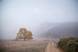 Southern Oregon Morning - Fall - Oregonl -  PNW - 2017 - Nilas Photography-6