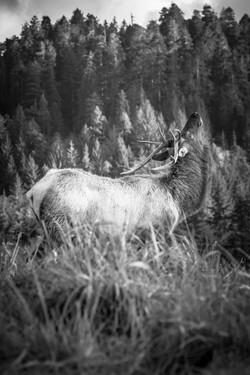 Nilas Photography - Elk - Northern California -9