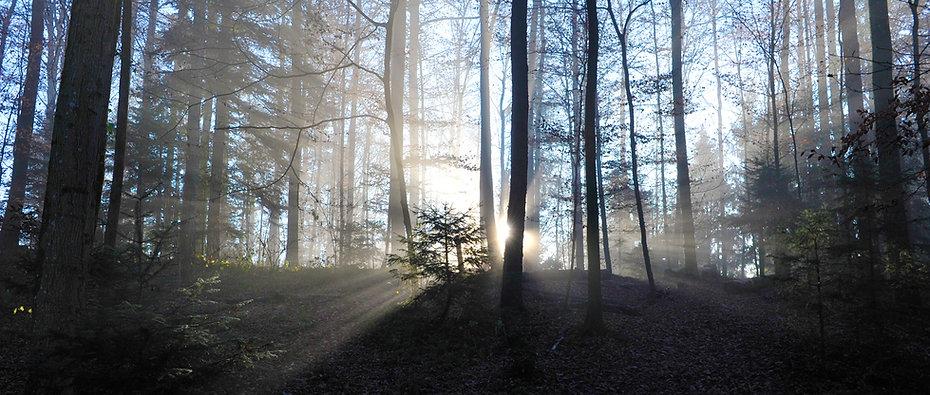 Waldkinderbaar_Stimmung.jpg