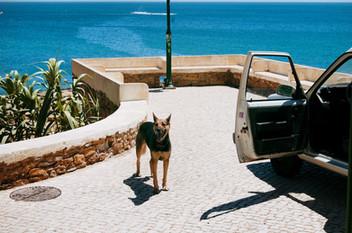 Hondje in Praia da Luz, Portugal
