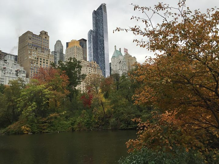 Fall in NY, Central Park