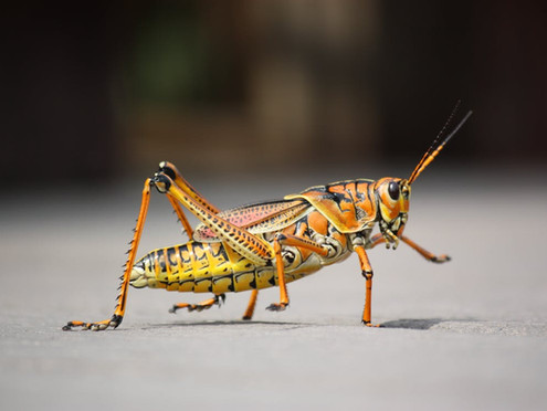 Bugging Out Over Edible Insects