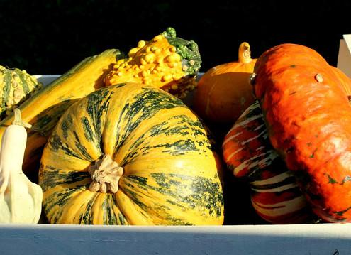 Fall Food Series Intro