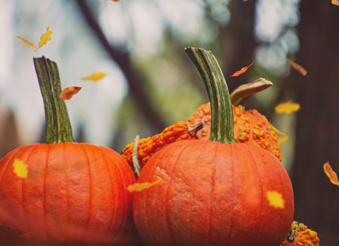 Fall Food Series: Hayrides and Pumpkin Pies
