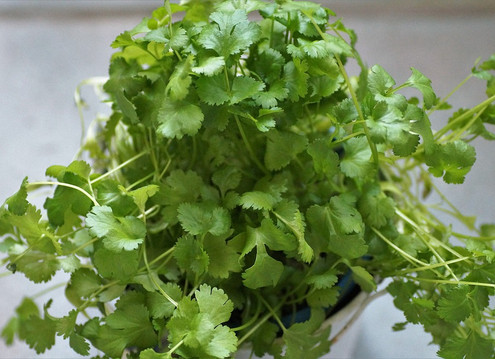 In Appreciation of Cilantro
