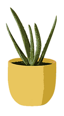 Drawing of a Small Cacti Indoor Plant.png