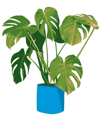 Drawing of a Monstera Plant.png