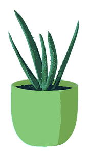 Drawing of a Small Cacti Indoor Plant.png.png