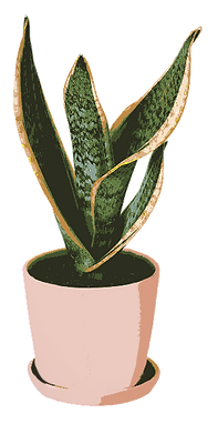 Drawing of a Medium Snake Plant.png