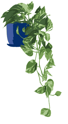 Drawing of a Ivy Leaf Indoor Plant
