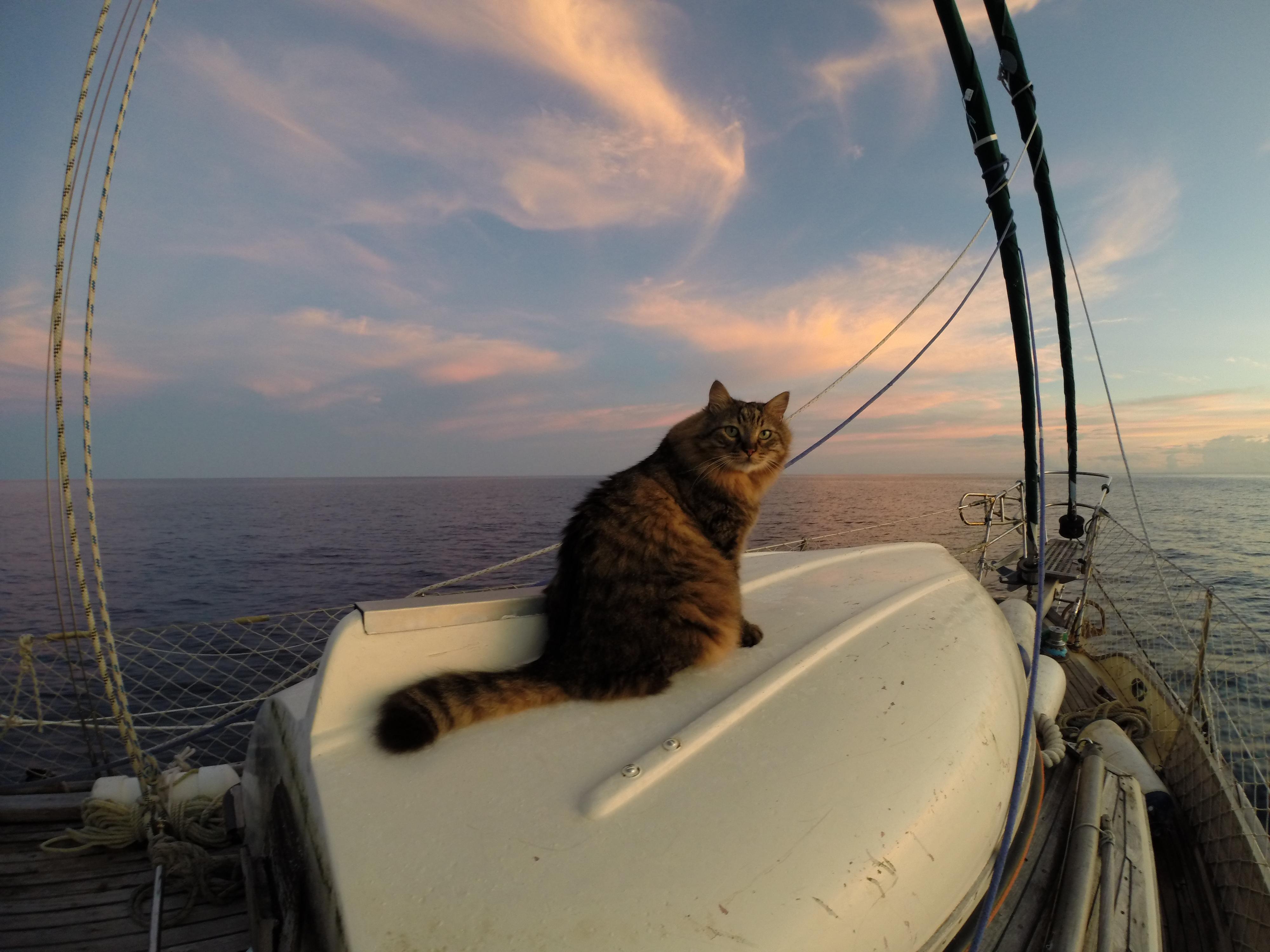 הרצאות מסע - לאן מפליגים?