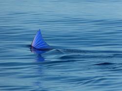 הרצאות מסע - דג מרלין